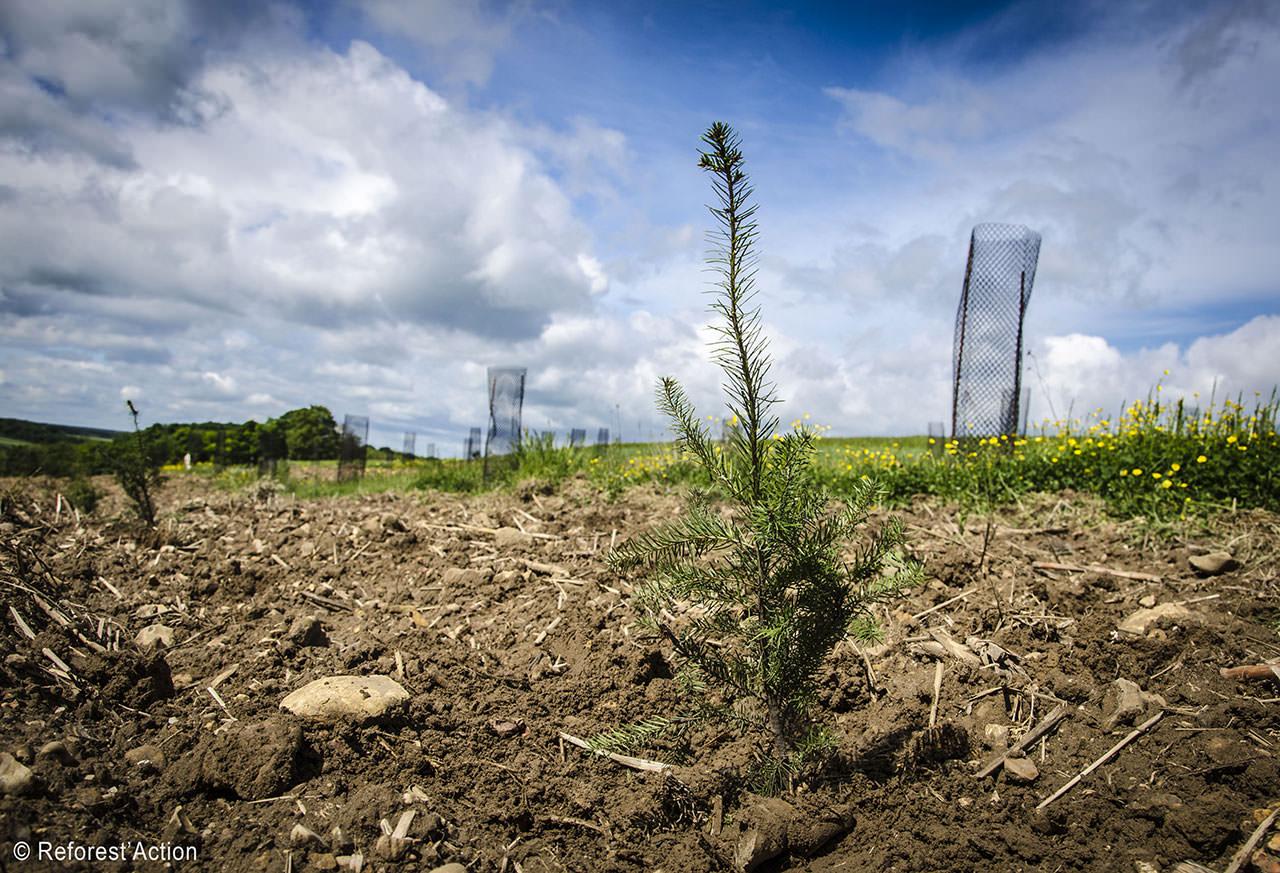 Chwette l'agence - communication expérientielle - Reforest'action
